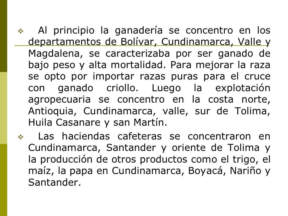 Al principio la ganadería se concentro en los departamentos de Bolívar, Cundinamarca, Valle y Magdalena, se caracterizaba por ser ganado de bajo peso y alta mortalidad.