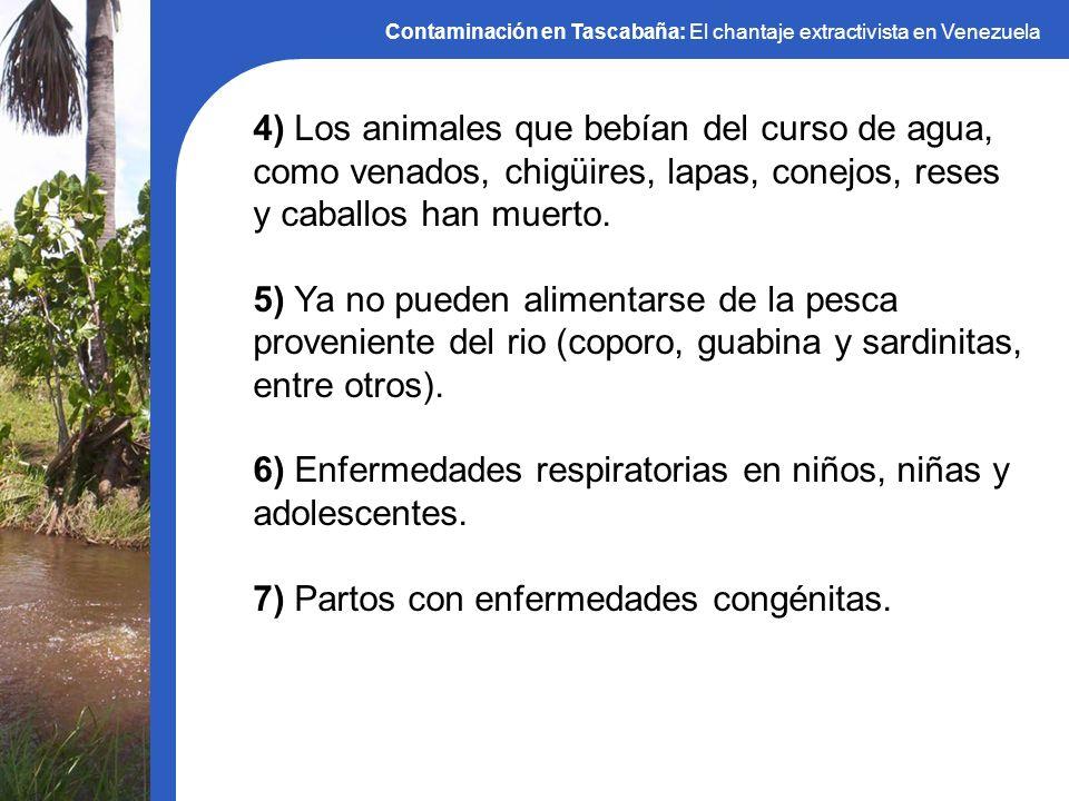 Contaminación en Tascabaña: El chantaje extractivista en Venezuela 4) Los animales que bebían del curso de agua, como venados, chigüires, lapas, conej