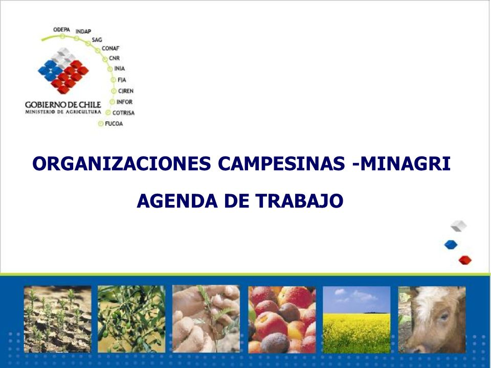 Instancias de trabajo conjunto Mesa Nacional Campesina Mesas regionales campesinas Comisiones de trabajo con INDAP Grupos de trabajo Propuesta de las Organizaciones Campesinas