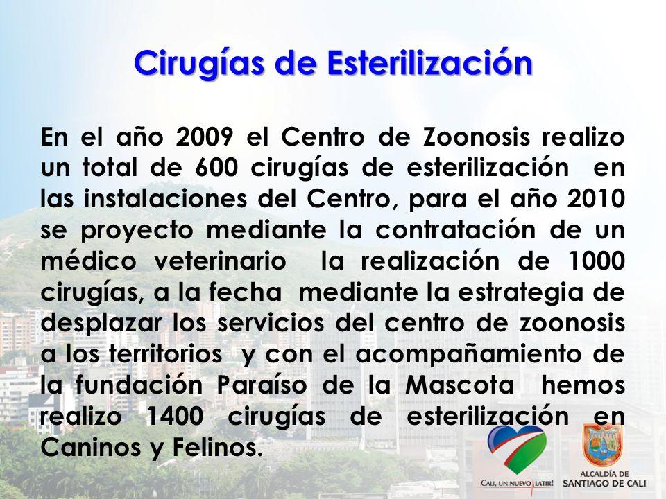 Cirugías de Esterilización En el año 2009 el Centro de Zoonosis realizo un total de 600 cirugías de esterilización en las instalaciones del Centro, pa