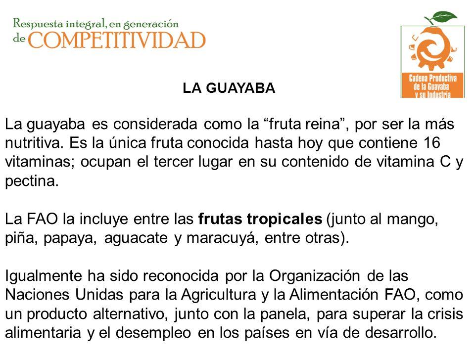 LA GUAYABA La guayaba es considerada como la fruta reina, por ser la más nutritiva. Es la única fruta conocida hasta hoy que contiene 16 vitaminas; oc