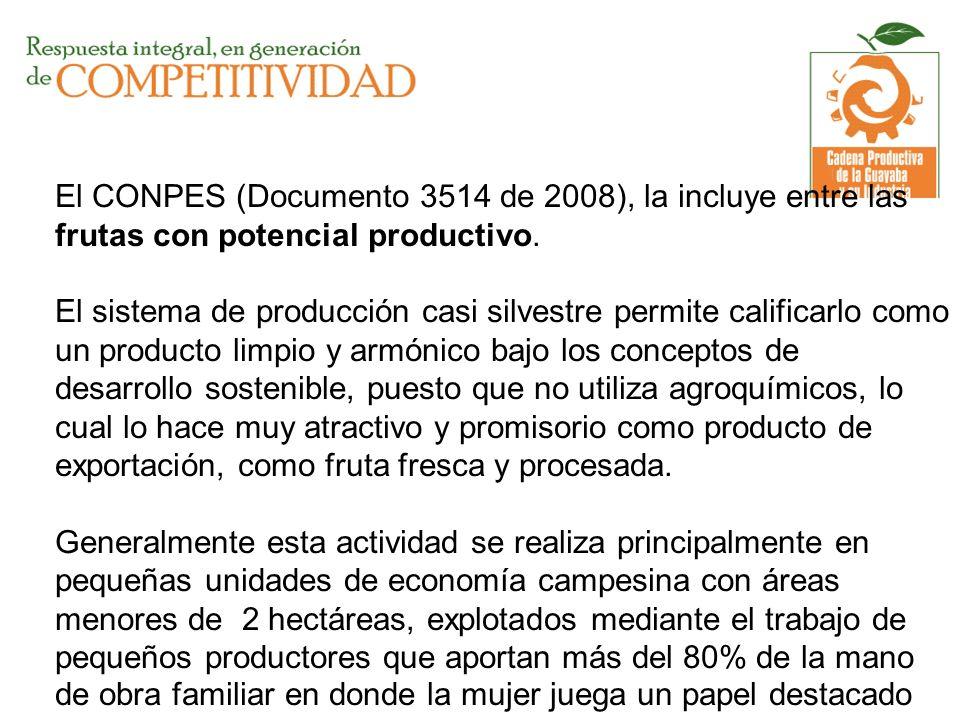 El CONPES (Documento 3514 de 2008), la incluye entre las frutas con potencial productivo. El sistema de producción casi silvestre permite calificarlo