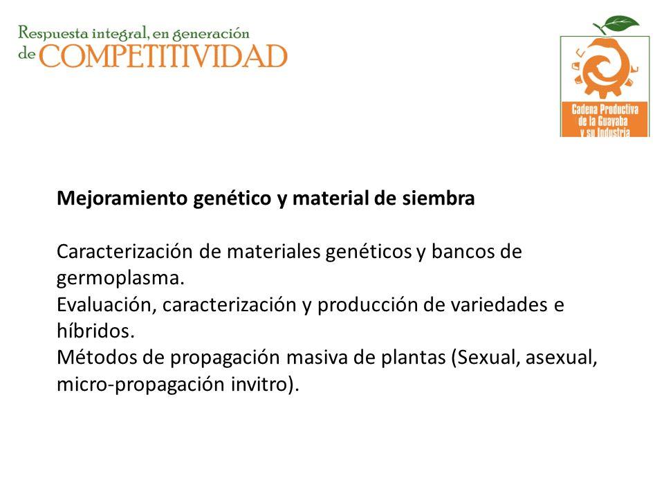 Mejoramiento genético y material de siembra Caracterización de materiales genéticos y bancos de germoplasma. Evaluación, caracterización y producción