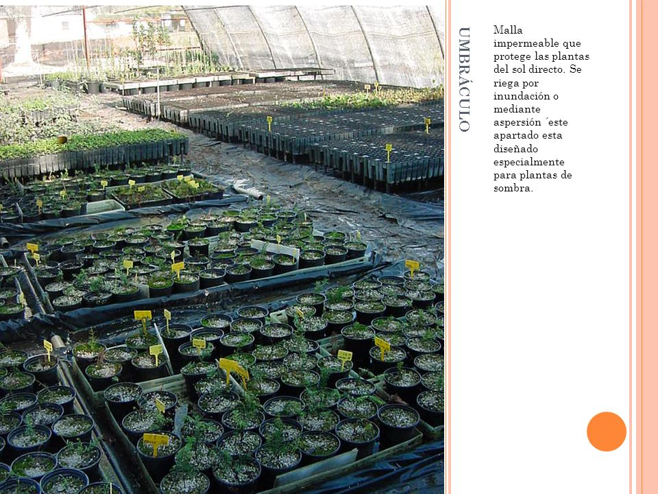 UMBRÁCULO Malla impermeable que protege las plantas del sol directo. Se riega por inundación o mediante aspersión ´este apartado esta diseñado especia