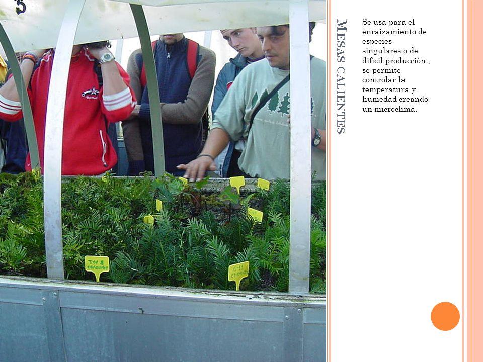 M ESAS CALIENTES Se usa para el enraizamiento de especies singulares o de difícil producción, se permite controlar la temperatura y humedad creando un microclima.