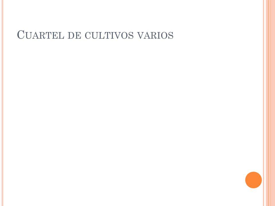 C UARTEL DE CULTIVOS VARIOS