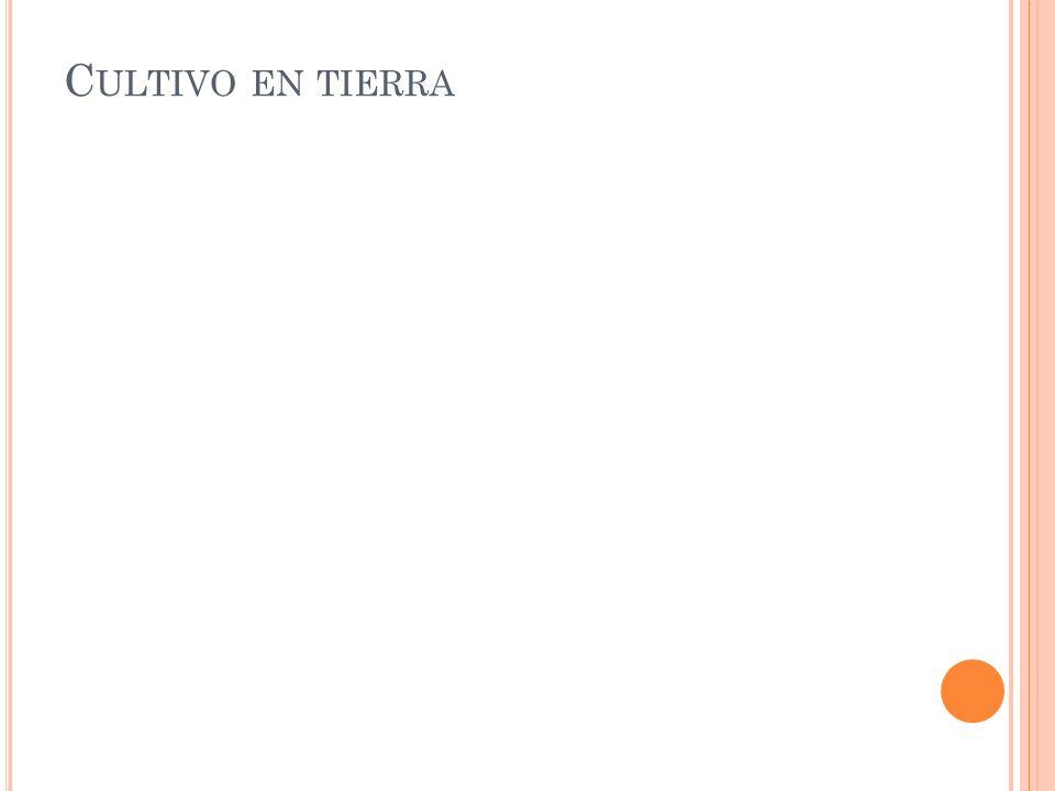 C ULTIVO EN TIERRA
