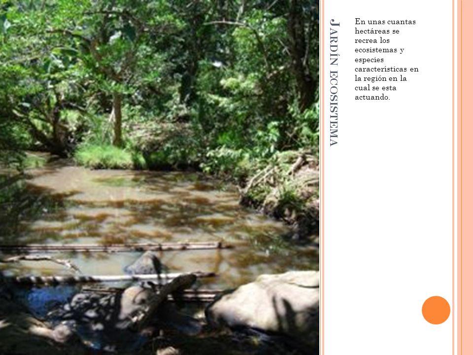 J ARDÍN ECOSISTEMA En unas cuantas hectáreas se recrea los ecosistemas y especies características en la región en la cual se esta actuando.