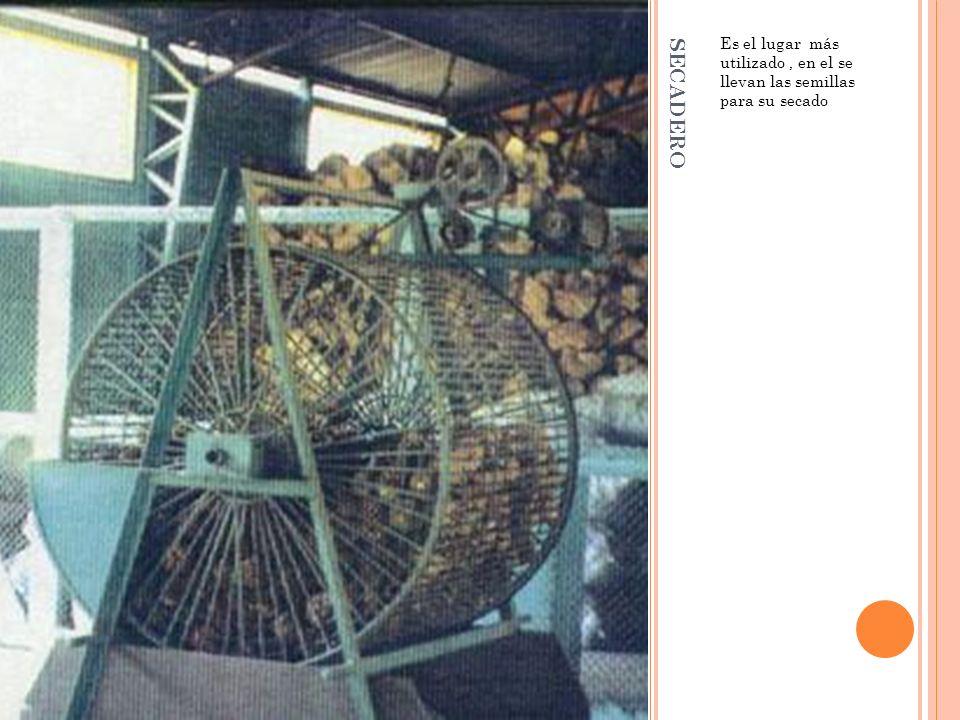 SECADERO Es el lugar más utilizado, en el se llevan las semillas para su secado