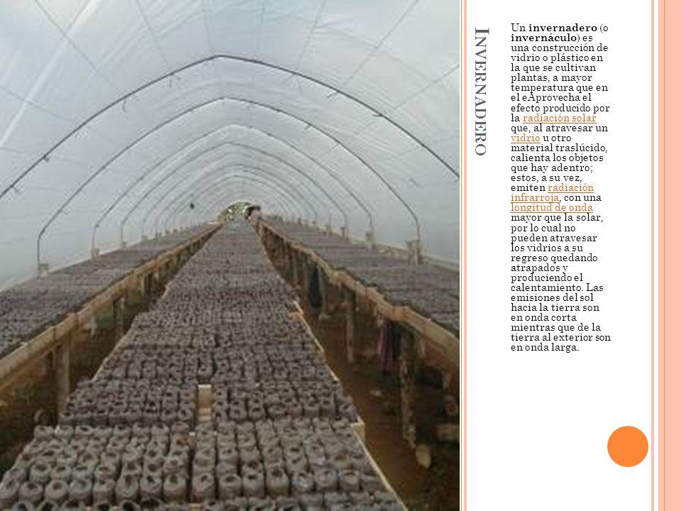 I NVERNADERO Un invernadero (o invernáculo ) es una construcción de vidrio o plástico en la que se cultivan plantas, a mayor temperatura que en el eAp