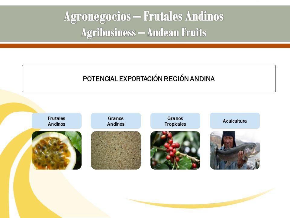 Frutales Andinos Granos Andinos Granos Tropicales Acuicultura POTENCIAL EXPORTACIÓN REGIÓN ANDINA