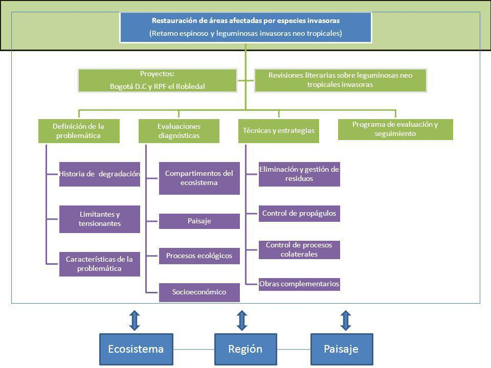 Restauración de áreas afectadas por especies invasoras (Retamo espinoso y leguminosas invasoras neo tropicales) Definición de la problemática Historia