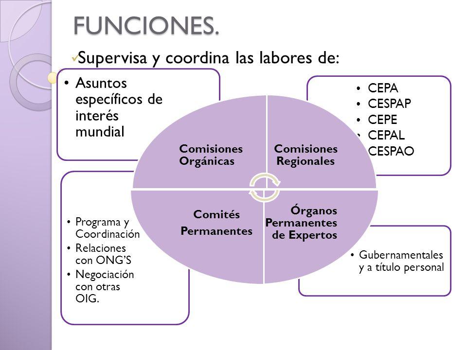FUNCIONES. Supervisa y coordina las labores de: Gubernamentales y a título personal Programa y Coordinación Relaciones con ONGS Negociación con otras