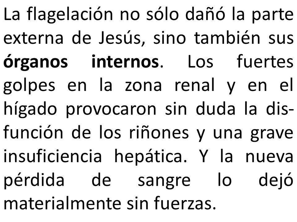 La flagelación no sólo dañó la parte externa de Jesús, sino también sus órganos internos. Los fuertes golpes en la zona renal y en el hígado provocaro