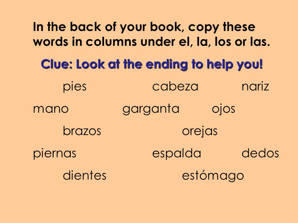 In the back of your book, copy these words in columns under el, la, los or las. Clue: Look at the ending to help you! piescabezanariz manogargantaojos