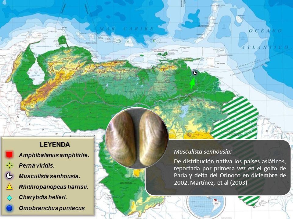 LEYENDA Amphibalanus amphitrite. Perna viridis. Musculista senhousia. Rhithropanopeus harrisii. Charybdis helleri. Omobranchus puntacus Musculista sen