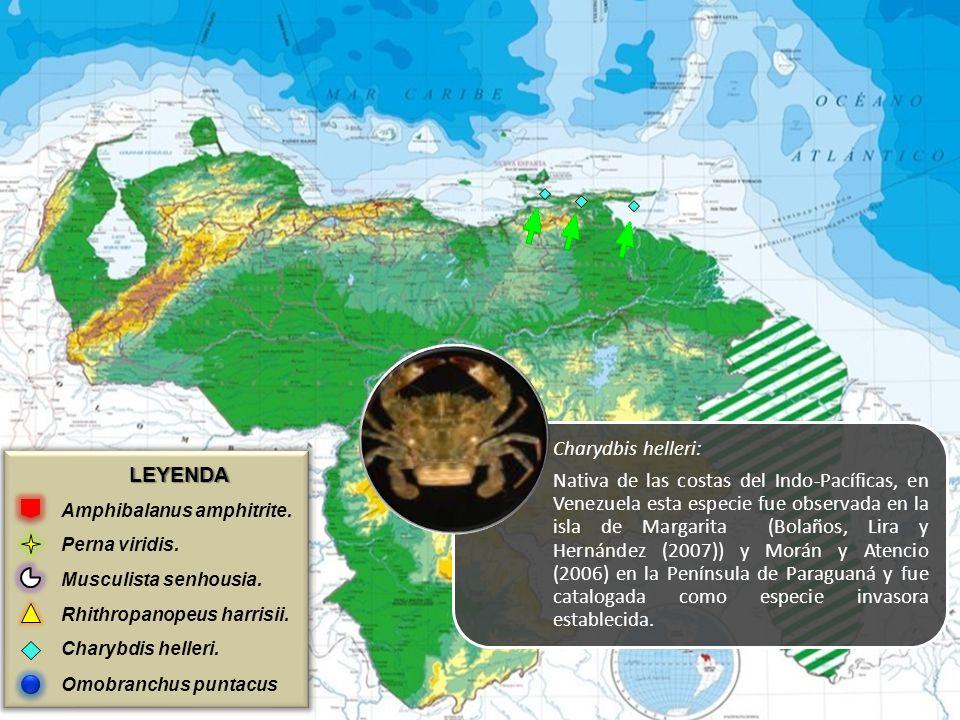 LEYENDA Amphibalanus amphitrite. Perna viridis. Musculista senhousia. Rhithropanopeus harrisii. Charybdis helleri. Omobranchus puntacus Charydbis hell