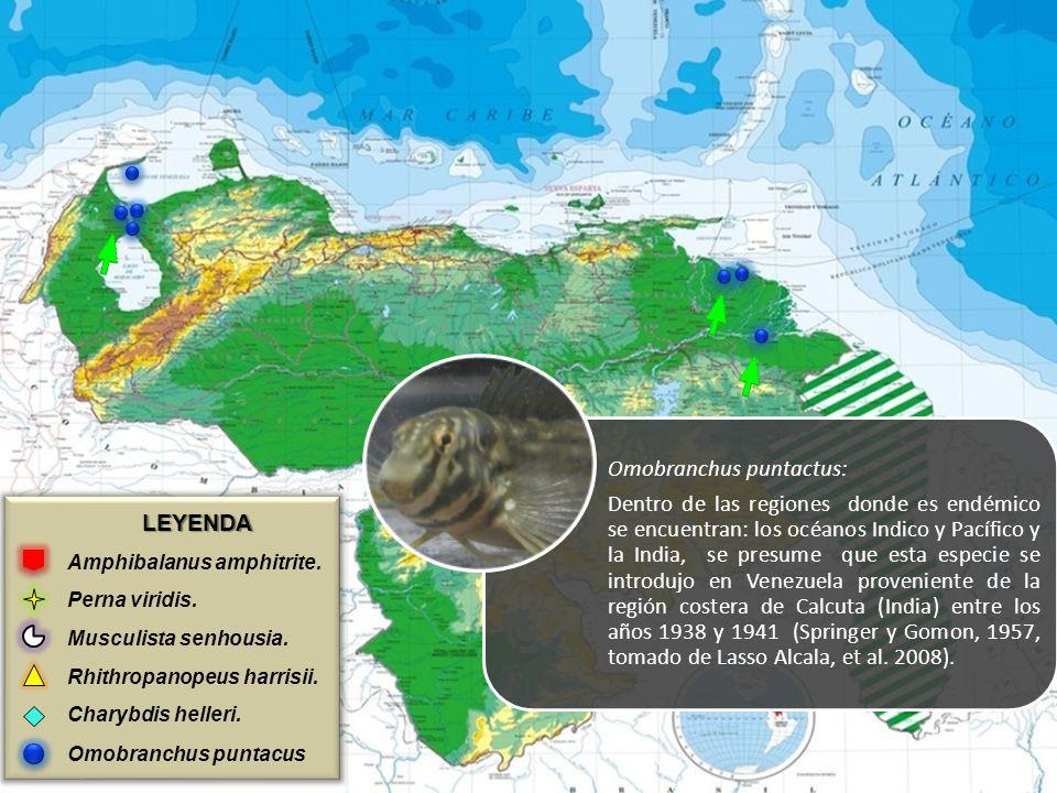 LEYENDA Amphibalanus amphitrite. Perna viridis. Musculista senhousia. Rhithropanopeus harrisii. Charybdis helleri. Omobranchus puntacus Omobranchus pu