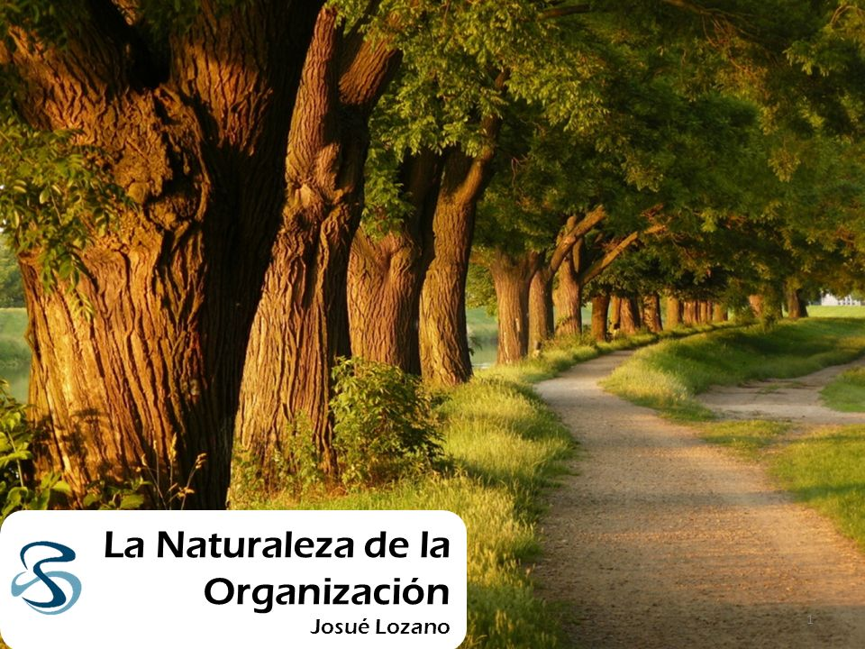 La Naturaleza de la Organización Josué Lozano 1