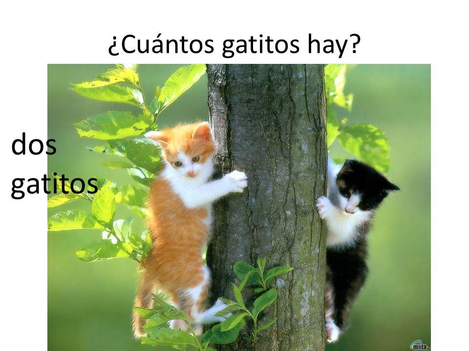 ¿Cuántos gatitos hay? dos gatitos
