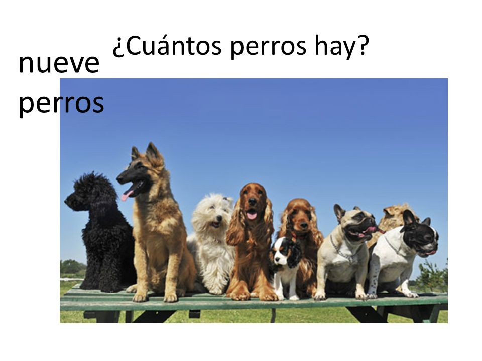 ¿Cuántos perros hay? nueve perros
