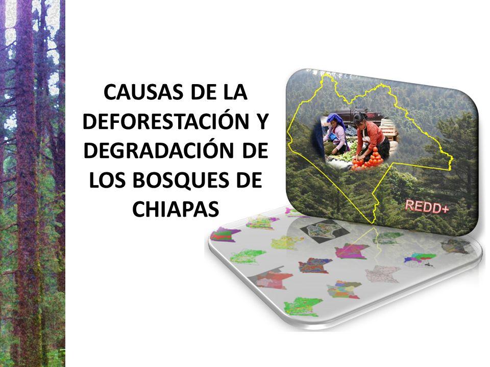 CAUSAS DE LA DEFORESTACIÓN Y DEGRADACIÓN DE LOS BOSQUES DE CHIAPAS