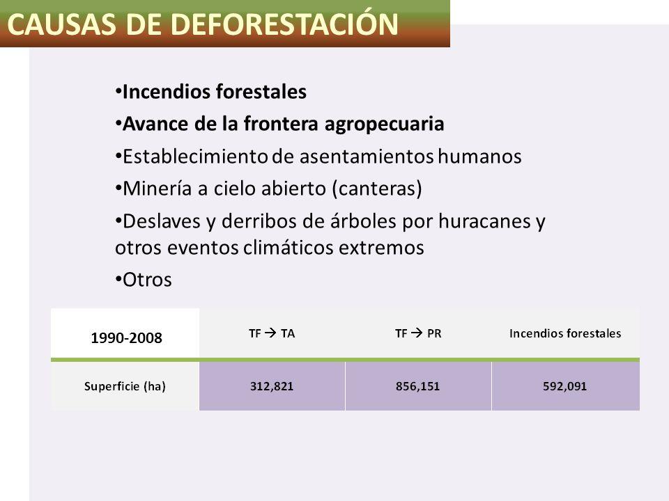 CAUSAS DE DEFORESTACIÓN Incendios forestales Avance de la frontera agropecuaria Establecimiento de asentamientos humanos Minería a cielo abierto (cant