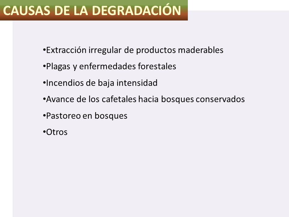CAUSAS DE LA DEGRADACIÓN Extracción irregular de productos maderables Plagas y enfermedades forestales Incendios de baja intensidad Avance de los cafe