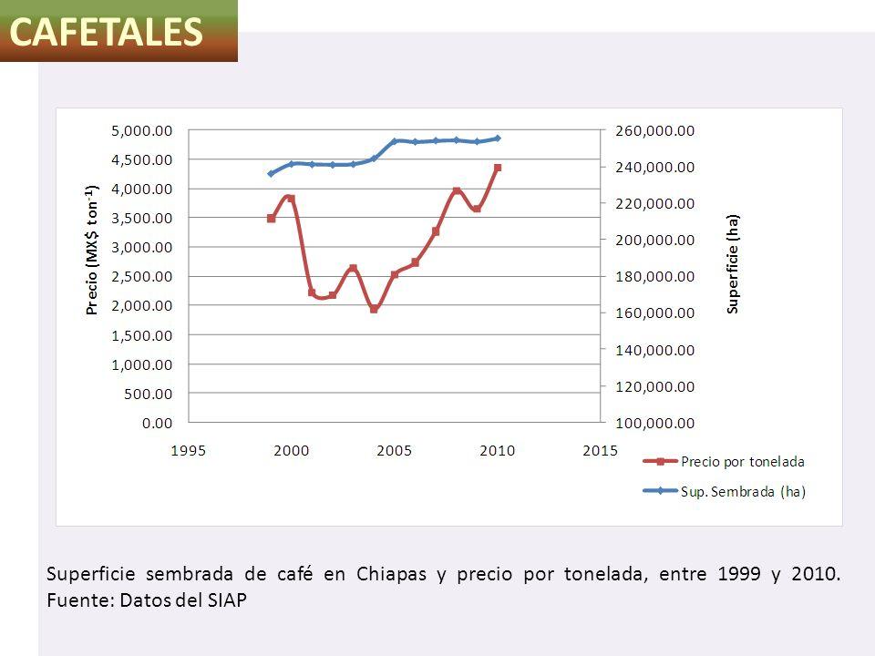 CAFETALES Superficie sembrada de café en Chiapas y precio por tonelada, entre 1999 y 2010. Fuente: Datos del SIAP