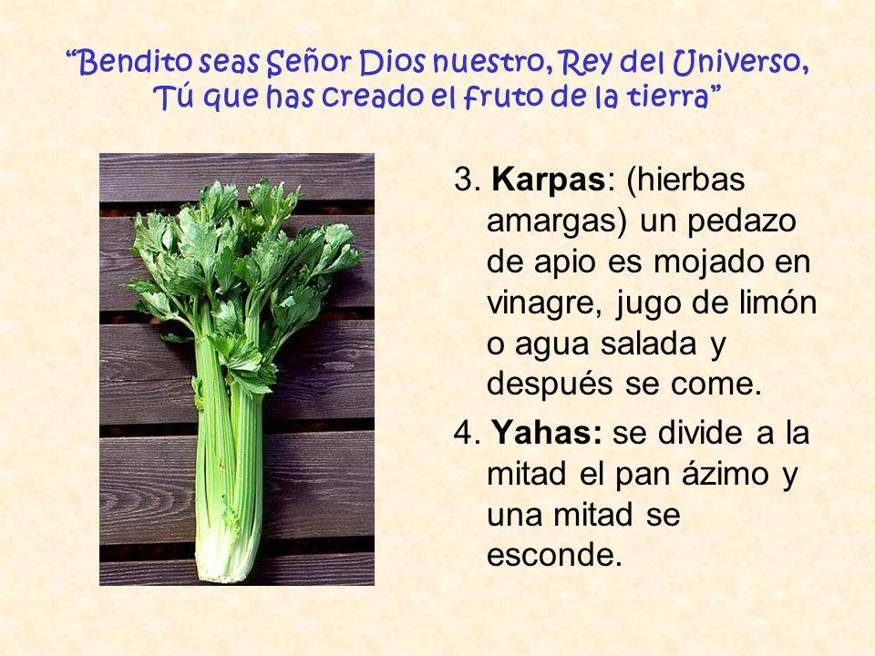 Bendito seas Señor Dios nuestro, Rey del Universo, Tú que has creado el fruto de la tierra 3. Karpas: (hierbas amargas) un pedazo de apio es mojado en