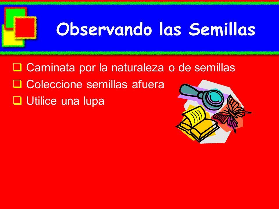 Observando las Semillas Caminata por la naturaleza o de semillas Coleccione semillas afuera Utilice una lupa