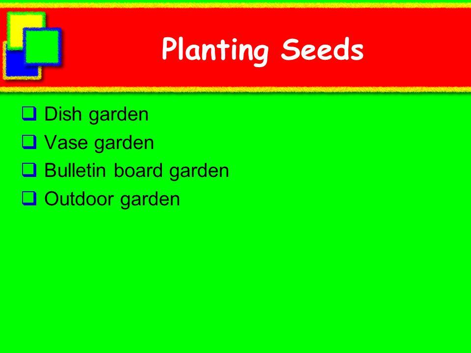 Planting Seeds Dish garden Vase garden Bulletin board garden Outdoor garden