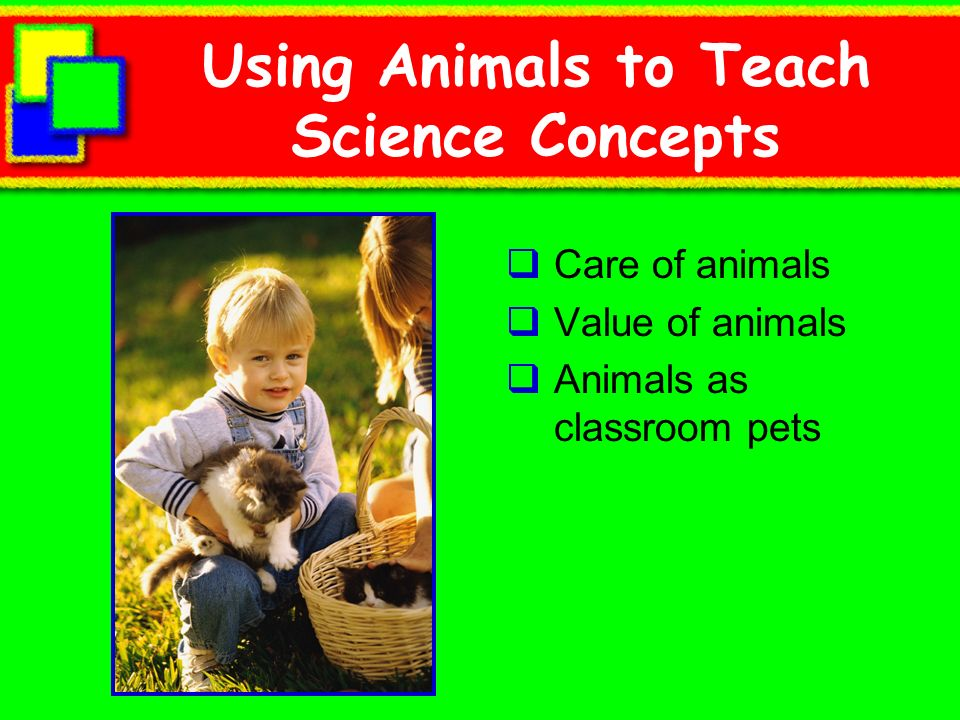 Using Animals to Teach Science Concepts Care of animals Value of animals Animals as classroom pets