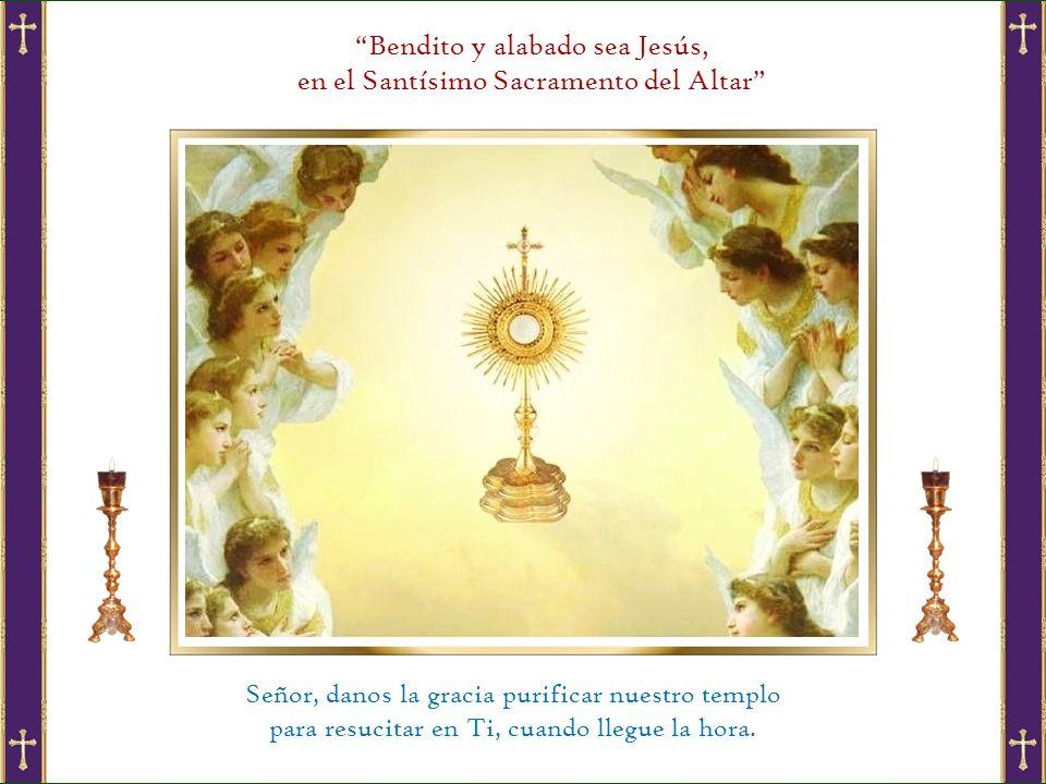 Bendito y alabado sea Jesús, en el Santísimo Sacramento del Altar Señor, danos la gracia purificar nuestro templo para resucitar en Ti, cuando llegue la hora.