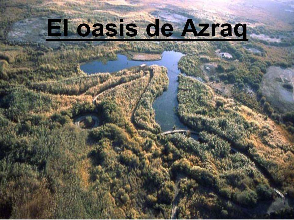 El oasis de Azraq