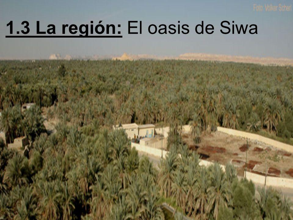 El Oasis de Siwa Se encuentra en el desierto libio 750 km al oeste de El Cairo
