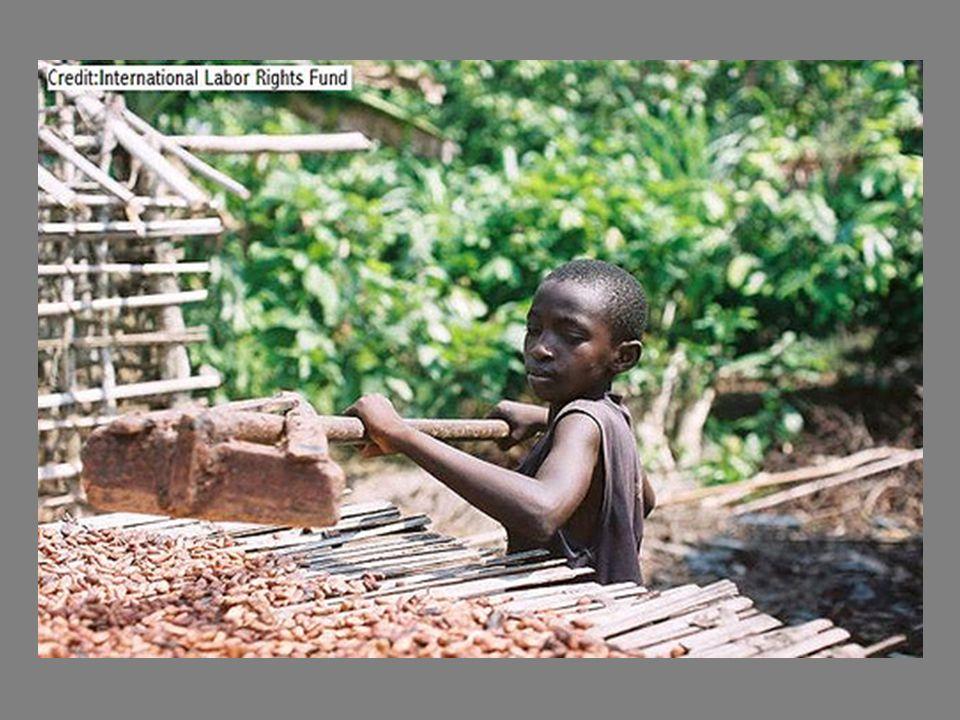 Los niños trabajan hasta 12 horas, utilizan herramientas peligrosas y están expuestos a pesticidas