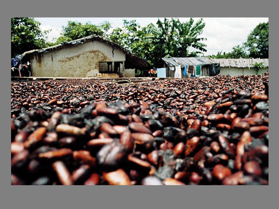Se cree que al menos 15.000 niños trabajan en esas condiciones en el vecino país de Costa de Marfil, produciendo el cacao que abastece al menos la mit