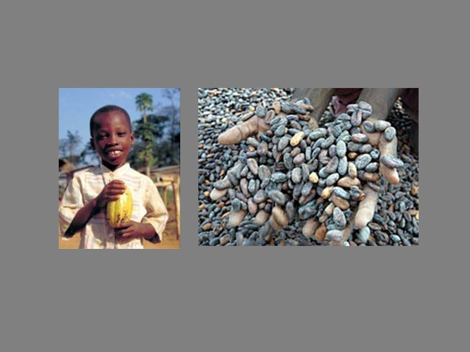 Según el primer ministro marfileño, Pascal Affi N'Guessan, las grandes empresas fabricantes de chocolate sólo están interesadas en sus ganancias. La a