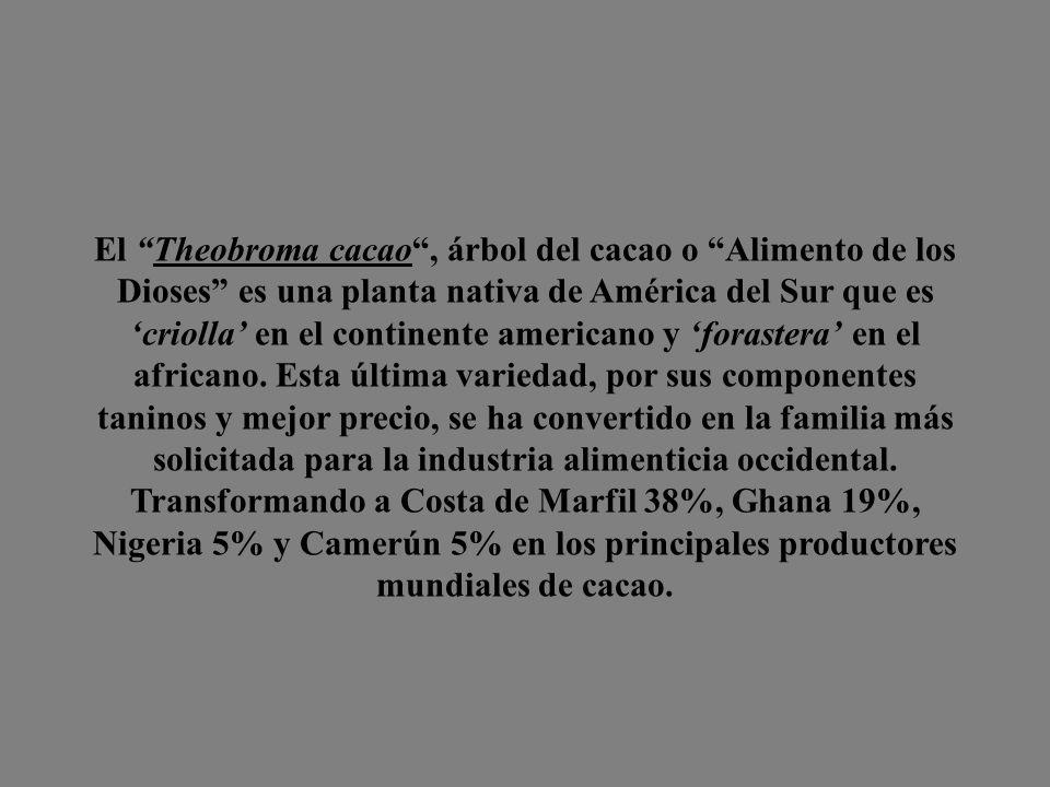El Theobroma cacao, árbol del cacao o Alimento de los Dioses es una planta nativa de América del Sur que es criolla en el continente americano y forastera en el africano.