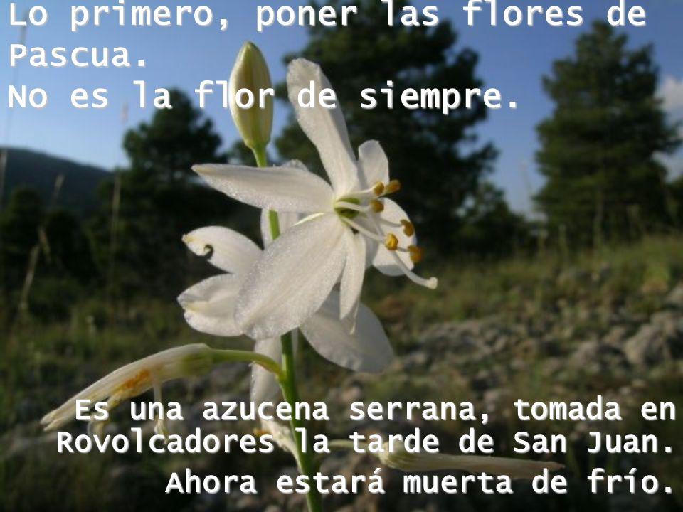 Lo primero, poner las flores de Pascua.No es la flor de siempre.