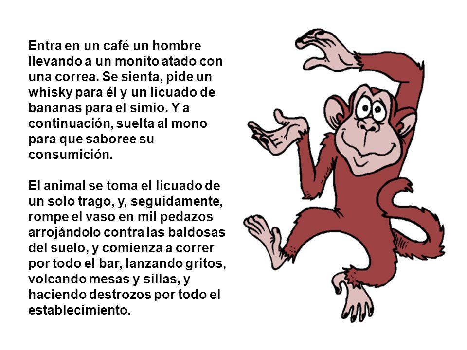 Finalmente, el mono llega a la mesa de billar...se sube encima...