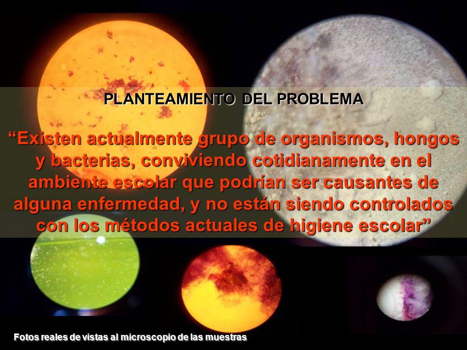 PLANTEAMIENTO DEL PROBLEMA Existen actualmente grupo de organismos, hongos y bacterias, conviviendo cotidianamente en el ambiente escolar que podrían
