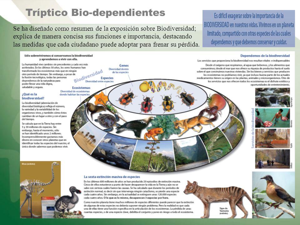 Se ha diseñado como resumen de la exposición sobre Biodiversidad; explica de manera concisa sus funciones e importancia, destacando las medidas que ca