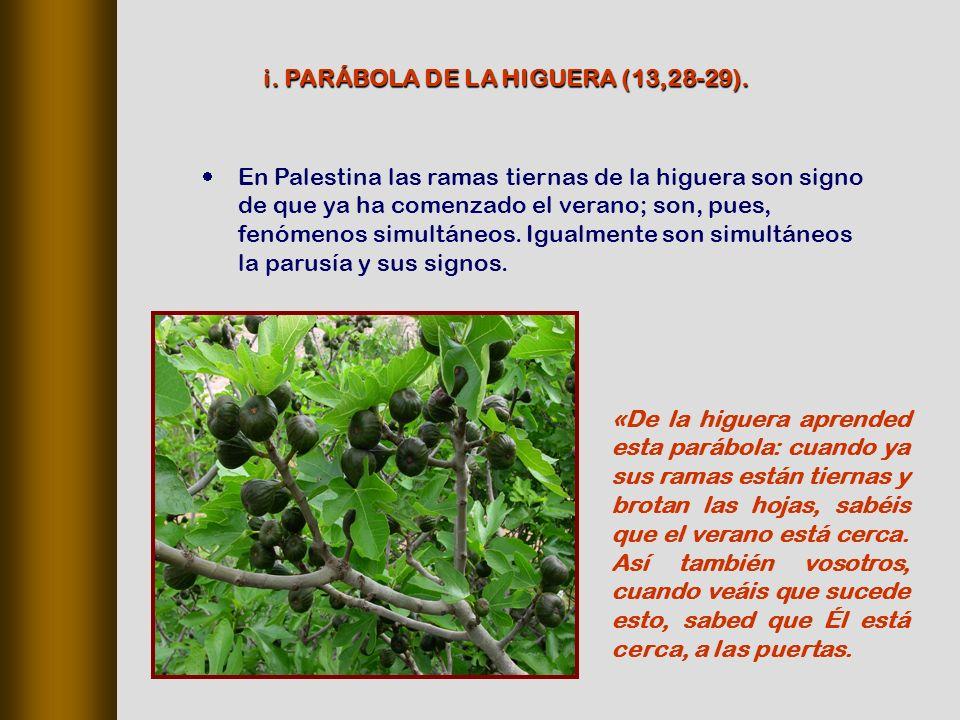 En Palestina las ramas tiernas de la higuera son signo de que ya ha comenzado el verano; son, pues, fenómenos simultáneos.