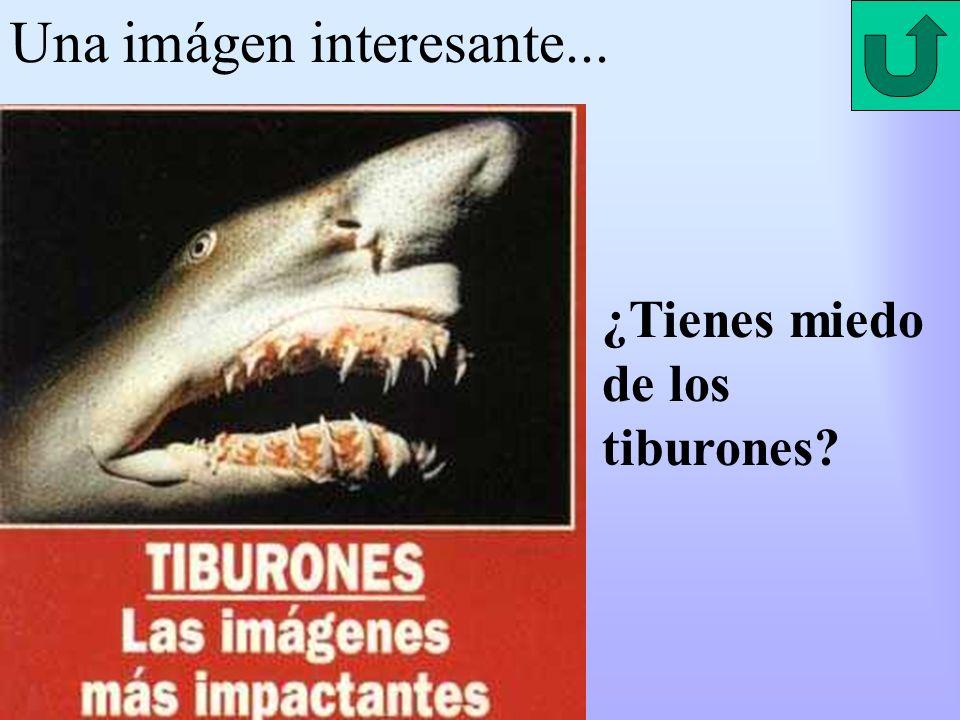 Una imágen interesante... ¿Tienes miedo de los tiburones?