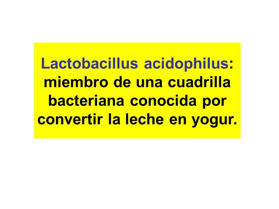 Acidophilus habia dejado de ser un villano y se habia convertido en un superheroe láctico