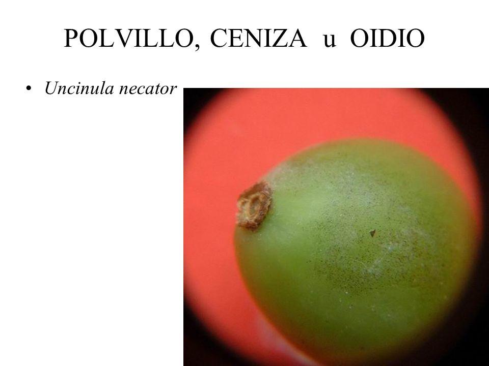 PERONOSPORA FUNGICIDAS SISTÉMICOS: En mezclas con Folpet o Mancozeb: –Fosetil aluminio (Mikal) –Metalaxil (Ridomil), Benalaxil (Galben) –Cimoxanil (Cu
