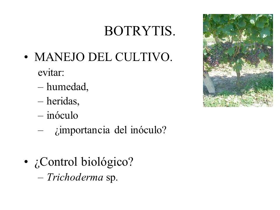 BOTRYTIS. Condiciones para la infección: –heridas –grosor de cutícula –variedad (tipo de racimos, tipo y microporos de piel, composición química, fito