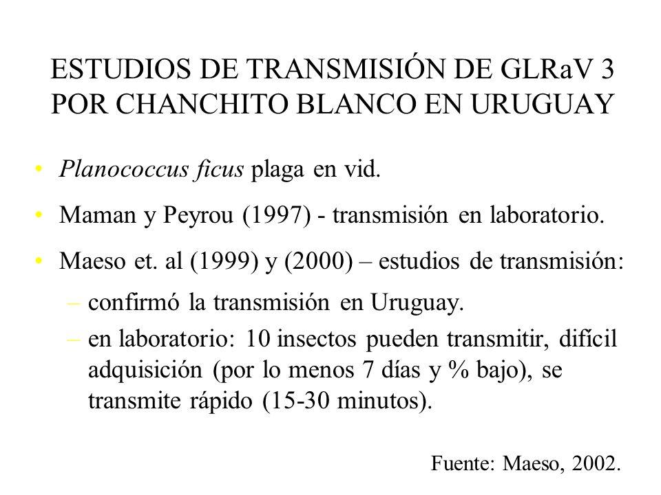 LEAF ROLL o ENRULAMIENTO. TRANSMISIÓN: prop. vegetativa chanchito blanco Planococcus ficus, Pseudococcus longispinus
